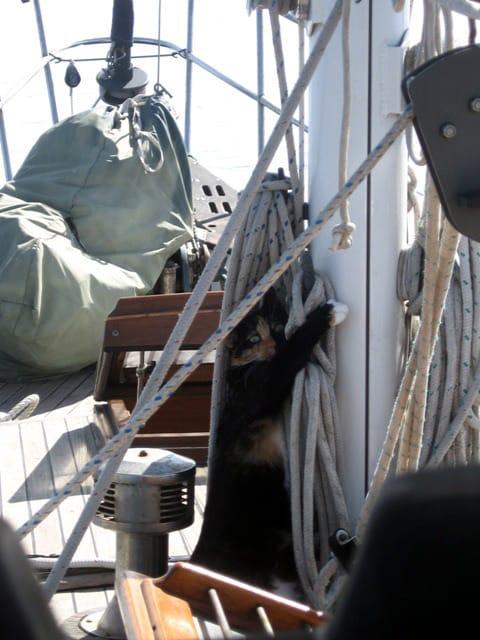 nessie in the rigging