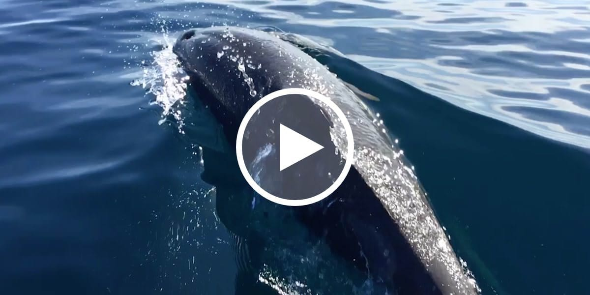 Dolphin Encounter Video