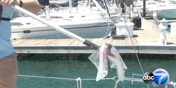 Plastic Pollution Purge: ABC 7 with Ryan Remsing from SailTime Chicago in Chicago, Illinois