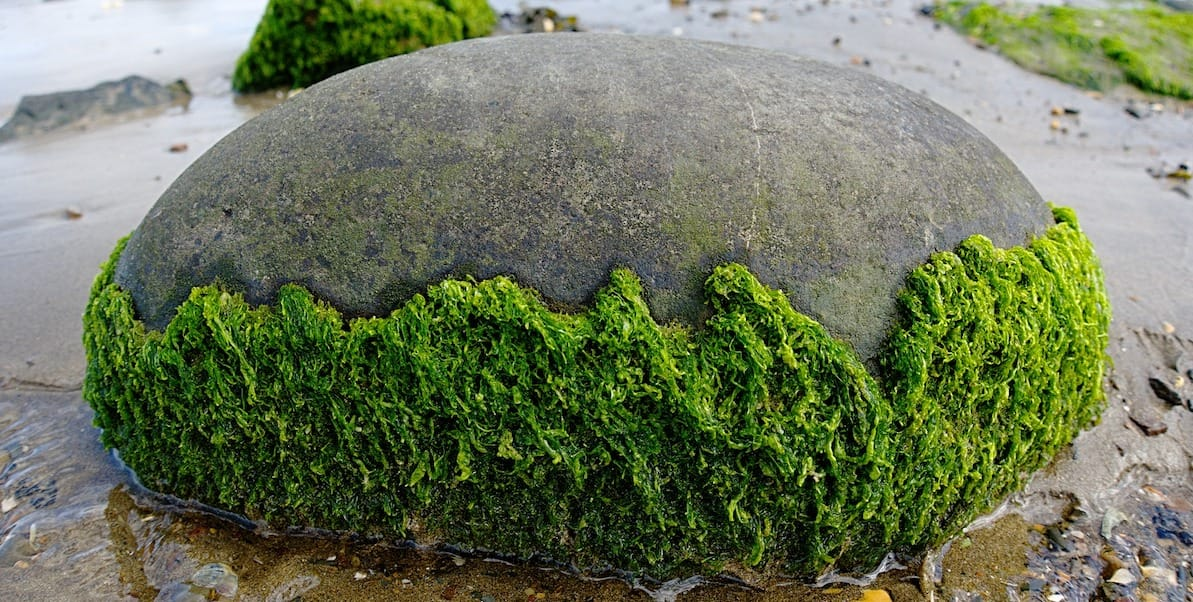 algae and sustainability