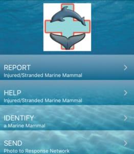NOAA marine mammal report