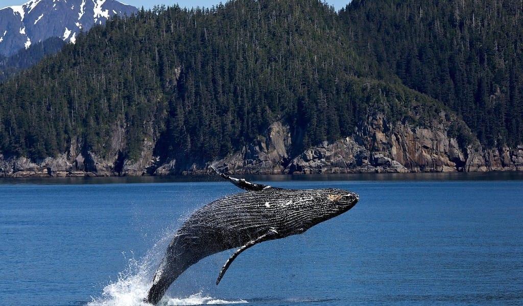 Sailing Bucket List - Sail Pacific Northwest